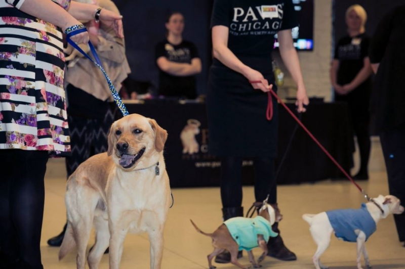 Nonstop Locksmith at Paws Chicago Event